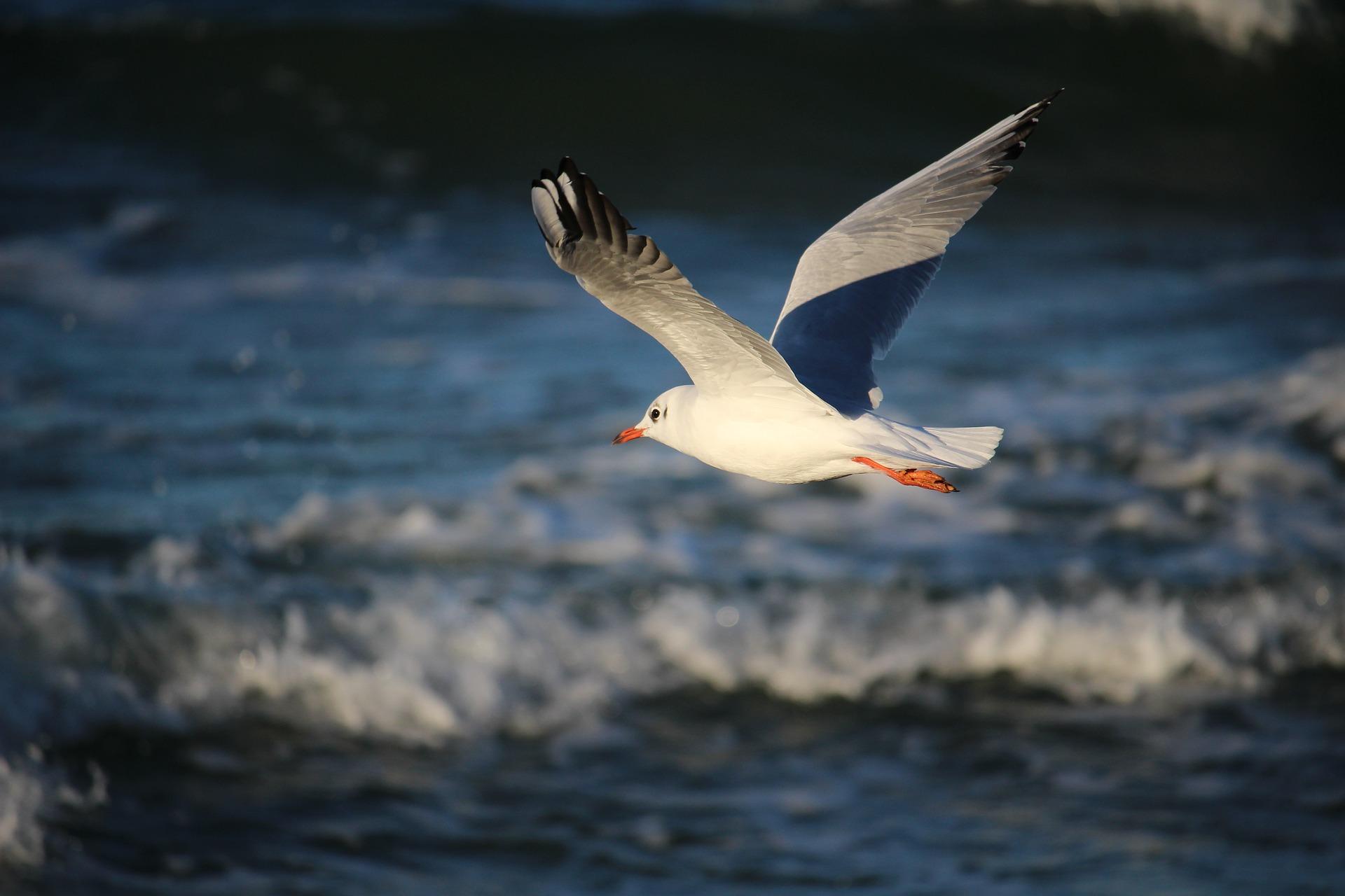 таких фото летящих чаек над морем мелководная бухта